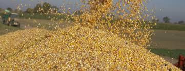 Wyjątkowo trudny rok dla rolników i producentów żywności