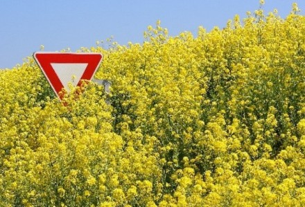 Niemcy protestują przeciwko żywności genetycznie modyfikowanej