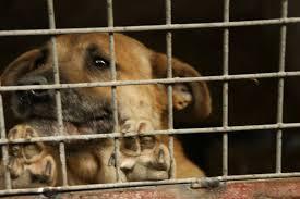 Dlaczego gminy płacą za gehennę zwierząt?