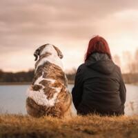 Jak szkolić psa / Darmowy poradnik